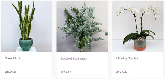 800 Flower Deals